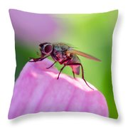 Pink Reflection On Flies Body. Throw Pillow