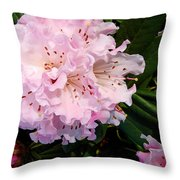 Pink Rhodies Throw Pillow
