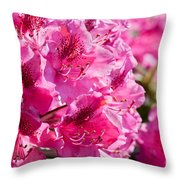 Rhododendron Called Azalea Bright Pink Flowers  Throw Pillow