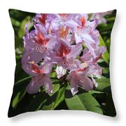 Pink Rhododendron In Sunshine Throw Pillow