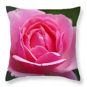 Pink Rose 08 Throw Pillow