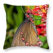 Pink Rose Butterfly Throw Pillow