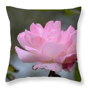 The Last Rose Throw Pillow