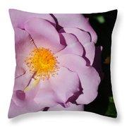 Pink Rose Throw Pillow