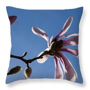 Pink Spring - Blue Sky And Magnolia Blossoms Throw Pillow