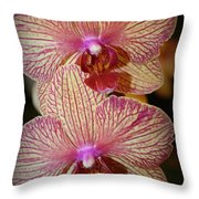 Pink Striped Orchids Throw Pillow