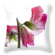 Pink Sweet Pea Throw Pillow
