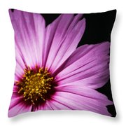 Pink Tickseed  Throw Pillow
