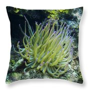 Pink Tipped Giant Sea Anemone Throw Pillow