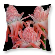 Pink Torch Ginger Trio On Black Throw Pillow