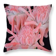 Pink Torch Ginger Trio On Black - No 2 Throw Pillow