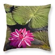 Pink Water Lily II Throw Pillow