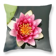 Pink Waterlily And Cloud Reflection Throw Pillow