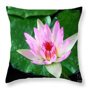 Pink Waterlily Flower Throw Pillow