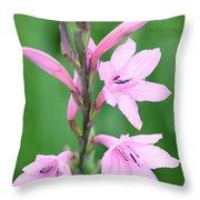 Pink Watsona  Throw Pillow