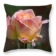 Pink Yellow Rose 01 Throw Pillow