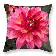 Pink Zinnia Flower Throw Pillow