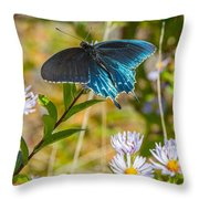 Pipevine Swallowtail On Asters Throw Pillow