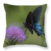 Pipevine Swallowtail Visiting Field Thistle Din158 Throw Pillow