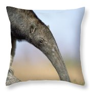 Pipewort Grassland Plants Blooming Throw Pillow