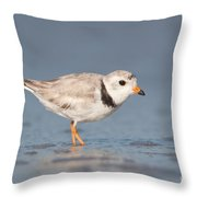 Piping Plover I Throw Pillow