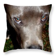 Pit Bull - 1 Throw Pillow