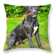 Pit Bull Terrier II Throw Pillow