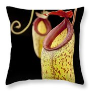 Pitcher Plant And Hybrids Sri Lanka Throw Pillow