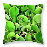 Pitcher Plants Palm Springs Throw Pillow