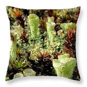 Pixie Cup Lichenscape Throw Pillow