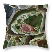 Plant Leaf Section Sem Throw Pillow by Eye of Science