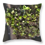 Plant Mutation Throw Pillow
