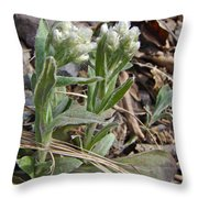 Plantain-leaved Pussytoes Wildflowers - Antennaria Plantaginifolia Throw Pillow