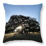 Plateau Oak Tree Throw Pillow