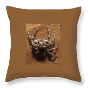 Platycryptus Undatus Throw Pillow