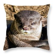 Play Time For Otters Throw Pillow