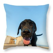 Playful Dog Closeup Throw Pillow