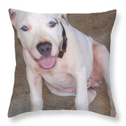 Playful Pitbull Puppy Haaweo Throw Pillow