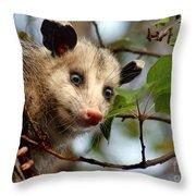 Playing Possum Throw Pillow
