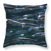 Plenty Of Fish In The Sea Throw Pillow
