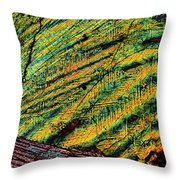 Feathers Of Time Throw Pillow