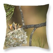 Plumbeous Vireo Begging Arizona Throw Pillow by Tom Vezo