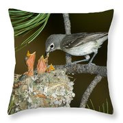 Plumbeous Vireo Feeding Chicks In Nest Throw Pillow