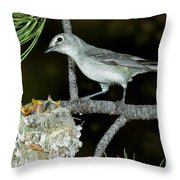 Plumbeous Vireo With Four Chicks In Nest Throw Pillow
