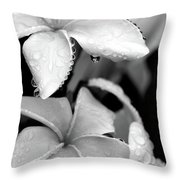 Plumeria Drip Throw Pillow