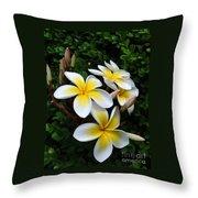 Plumeria In The Sunshine Throw Pillow