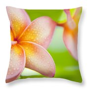 Plumeria Pastels Throw Pillow