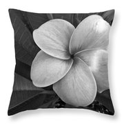 Plumeria With Raindrops Throw Pillow by Shane Kelly