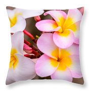 Plumerias Of Paradise 12 Throw Pillow