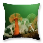 Plumose Anemone In Puget Sound Throw Pillow